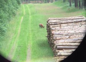 Rotwild auf einer Äsungsfläche in der Nähe von Neuruppin