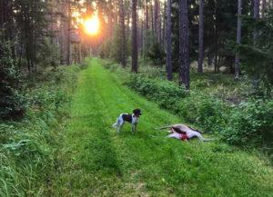 Lotta am Morgen im Wald