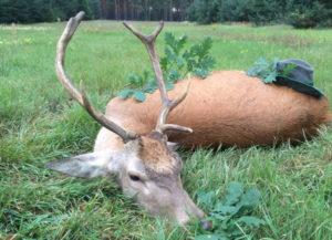 Jagderfolg in der Rotwildbrunft