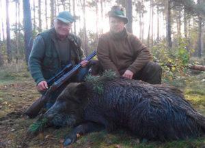 Keiler beim Morgenansitz Jagdreisen Brandenburg