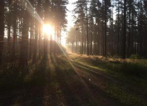 Sonnenuntergang bei den Jagdreisen Brandenburg